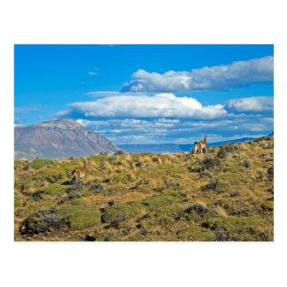 Carte Postale Pays de Guanaco, Patagonia