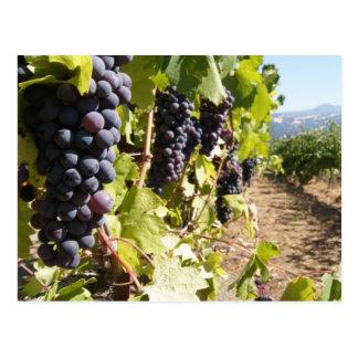 Carte Postale Pays de vin de la Californie