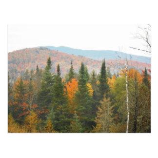 Carte Postale Paysage de scène d'arbres d'Adirondacks d'automne