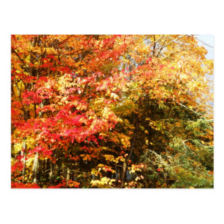 Carte Postale Paysage de scène d'arbres d'Adirondacks de champ