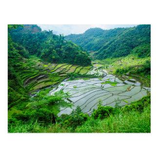 Carte Postale Paysage de terrasse de riz, Philippines