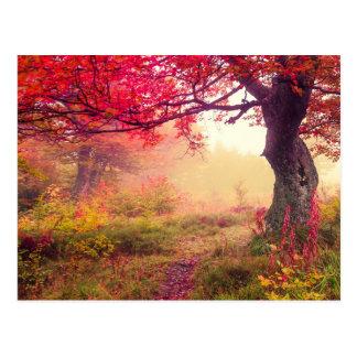 Carte Postale Paysage majestueux avec des arbres d'automne dans