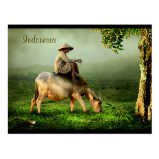 Carte Postale Paysage pittoresque de l'Indonésie avec Buffalo et