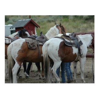 Carte Postale Peignez la queue de cheval