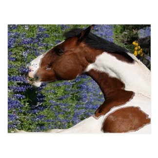 Carte Postale Peignez le cheval dans le domaine des fleurs