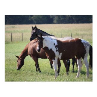 Carte Postale Peignez le cheval et les amis