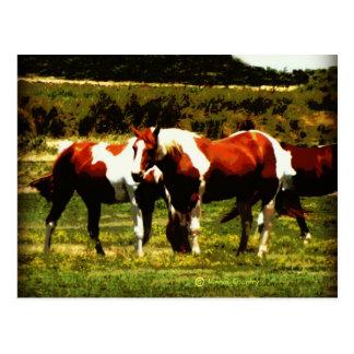 Carte Postale Peignez les chevaux