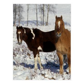 Carte Postale Peignez les chevaux dans la neige