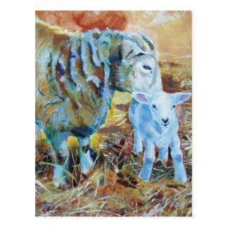 Carte Postale Peinture d'agneau et de moutons