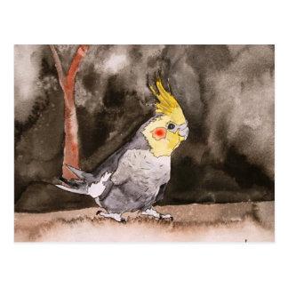 Carte Postale peinture d'oiseau de cockatiel