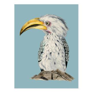 Carte Postale Peinture Jaune-Affichée d'aquarelle de calao