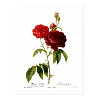 Carte Postale Peinture vintage rouge-foncé de roses