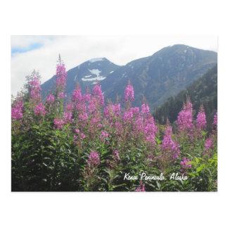 Carte Postale Péninsule de Kenai, Alaska