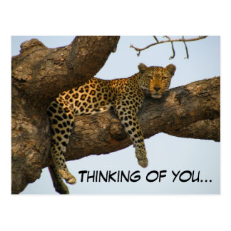 Carte Postale Pensée à vous (léopard dans un arbre)
