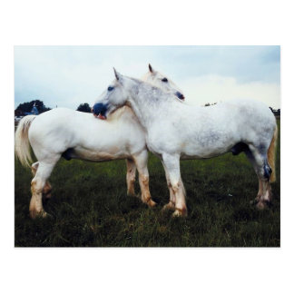 Carte Postale Percherons se toilettant