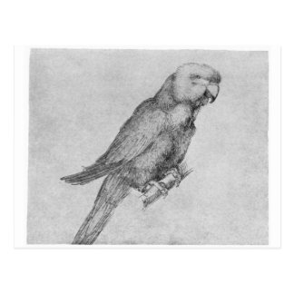 Carte Postale Perroquet par Albrecht Durer