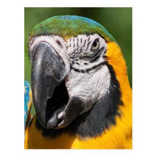 Carte Postale perroquet sur sa perche