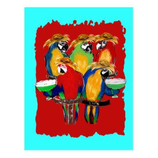 Carte Postale Perroquets de Drunkin