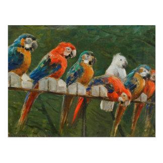 Carte Postale Perroquets vintages colorés