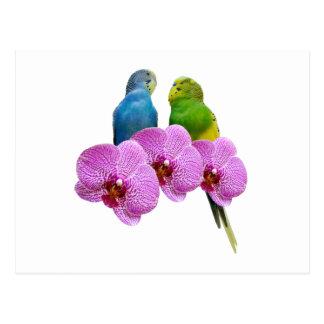 Carte Postale Perruche avec l'orchidée pourpre