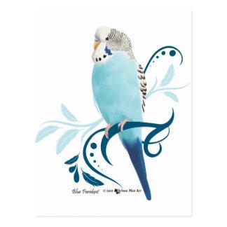 Carte Postale Perruche bleue