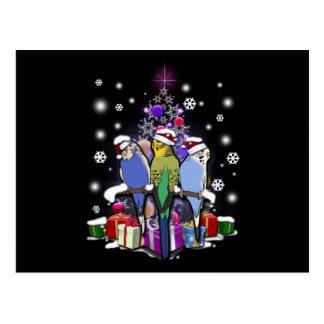 Carte Postale Perruches avec le cadeau et les flocons de neige