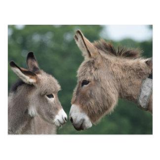 Carte Postale Petit âne