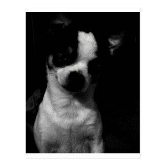 Carte Postale Petit chien de chiwawa
