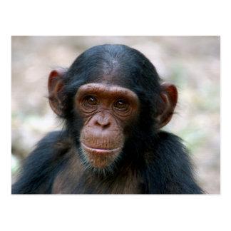 Carte Postale Petit chimpanzé