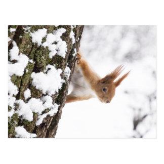 Carte Postale Petit écureuil