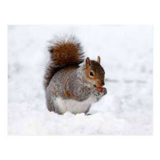 Carte Postale Petit écureuil brun mignon dans la neige
