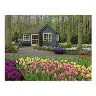 Carte Postale Petit fleuriste de cottage, jardins de Keukenhof,