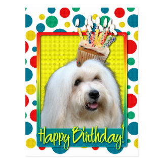 Carte Postale Petit gâteau d'anniversaire - coton de Tulear