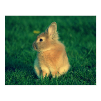 Carte Postale Petit lapin