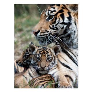 Carte Postale Petits animaux de tigre