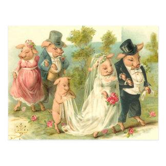 Carte Postale Peu de mariage porcin