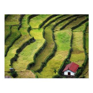 Carte Postale Philippines, Batad, vue élevée de riz