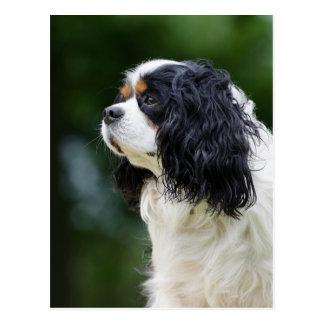 Carte Postale Photo cavalière d'amoureux de les chiens