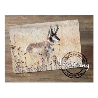 Carte Postale Photo d'antilope de Pronghorn sur le bois -