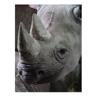 Carte Postale Photo de rhinocéros noir