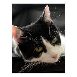 Carte Postale Photo noire et blanche de visage de chat