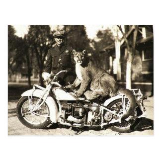 Carte Postale photo vintage de policier sur le puma de moto
