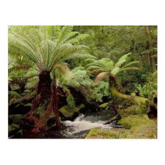Carte Postale Photographie de la Tasmanie Australie