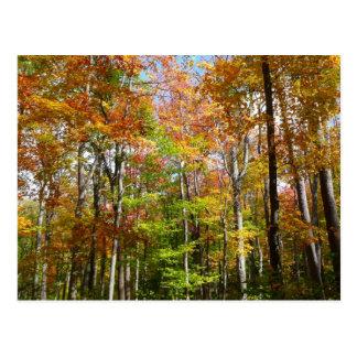 Carte Postale Photographie de paysage d'automne de la forêt II