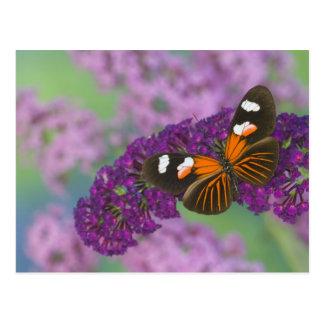 Carte Postale Photographie de Sammamish Washington de papillon