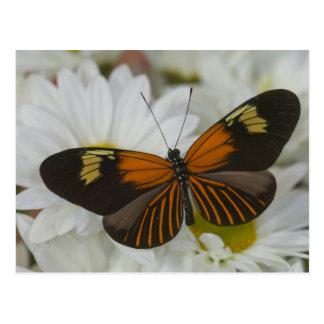 Carte Postale Photographie de Sammamish Washington du papillon