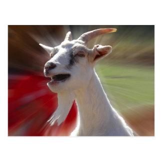 Carte Postale Photographie drôle de chèvre de Tallking