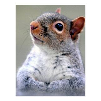 Carte Postale Photographie grise de visage d'écureuil