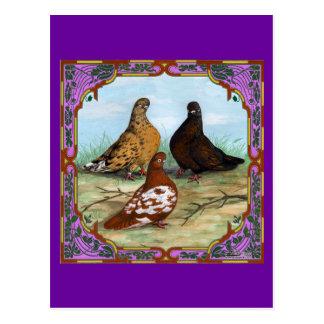 Carte Postale Pigeons de Shortfaced de l'anglais encadrés