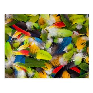 Carte Postale Pile des plumes colorées